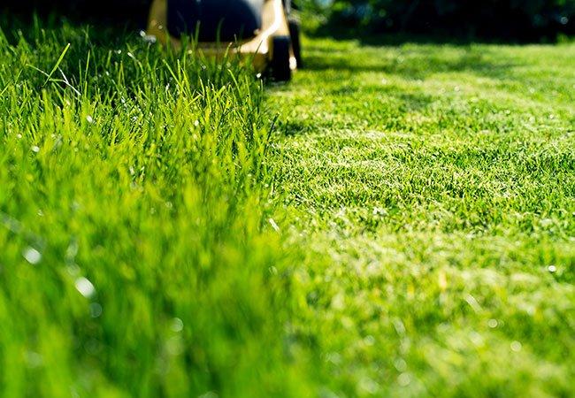 Græsslåning efterlader afklippet græs på græsset.
