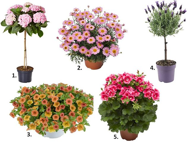 sommer blomster til hagen