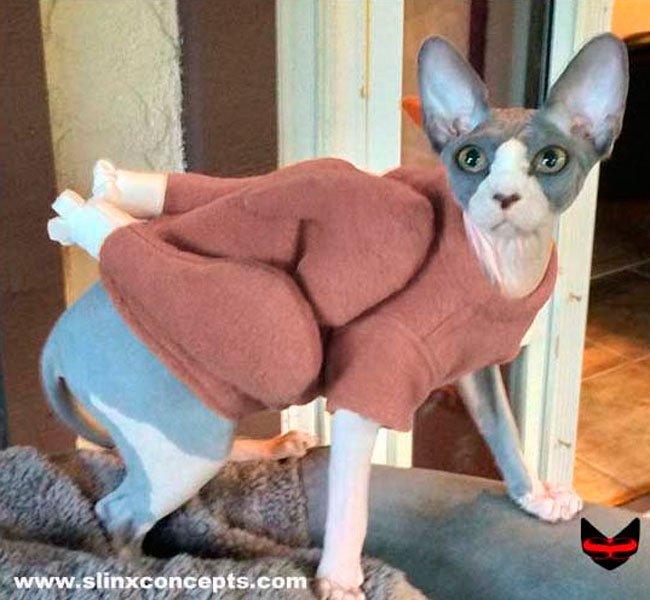 Julegave til hund og kat: kalkun fleece.