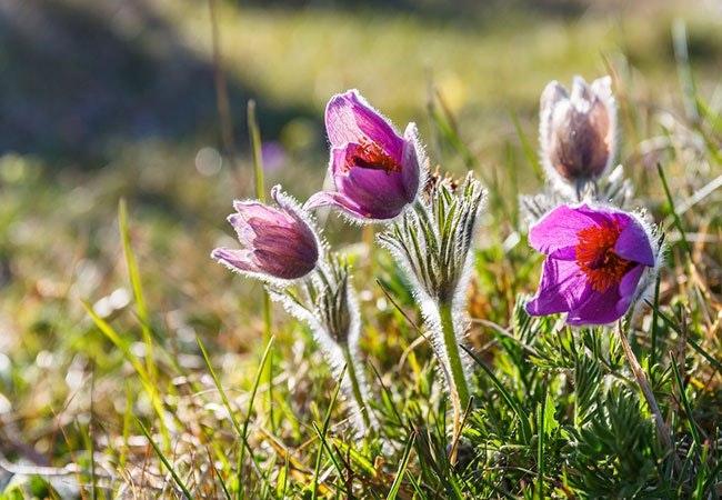 Dyr og planter ved besked om forårets komme