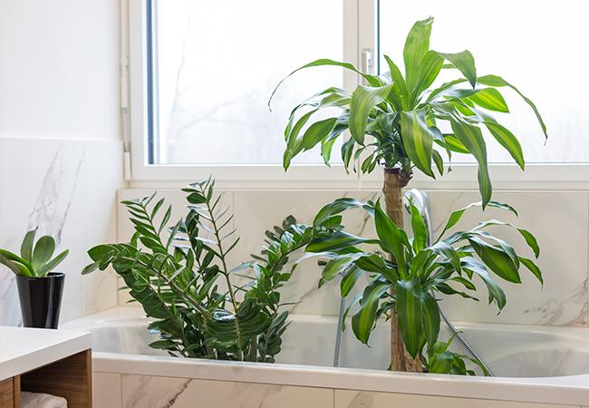 planter i badekareret