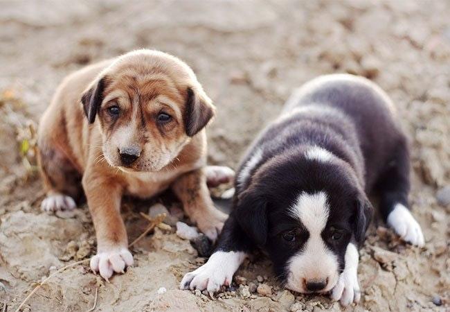 12 fascinerende ting, du måske ikke vidste om nyfødte hundehvalpe