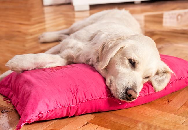 hund der slapper af og holdes varm og tør