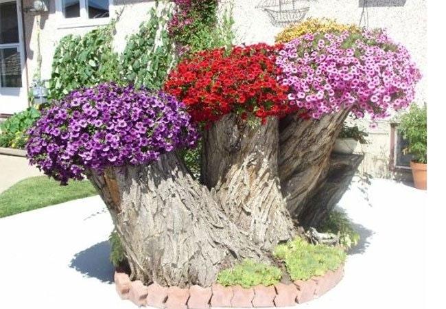 Brug træstubbe til dine planter og blomster