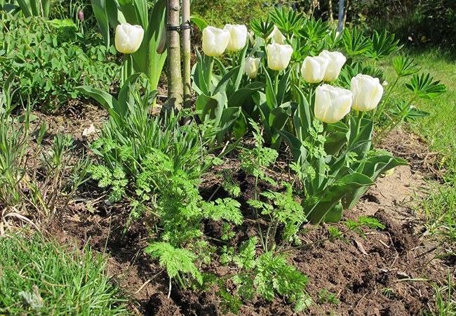 De bedste råd til haven i maj
