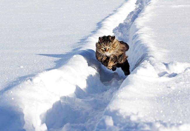 Kattes hemmeligheder - deres topfart.