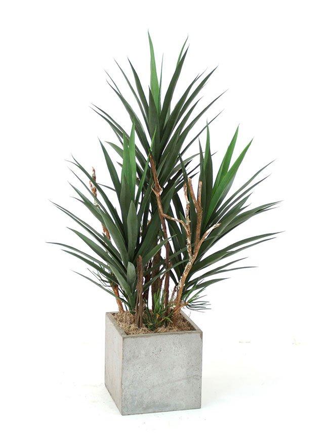 Yucca palme i betonkrukke.