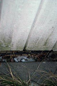 Veggkledningen er ofte utsatt for sopp og råte.