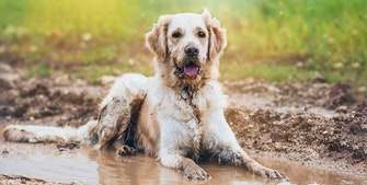 dusje hunden