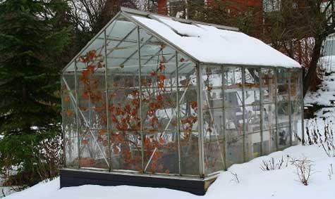 Drivhus: Kan brukes til overvintring av hardføre planter.