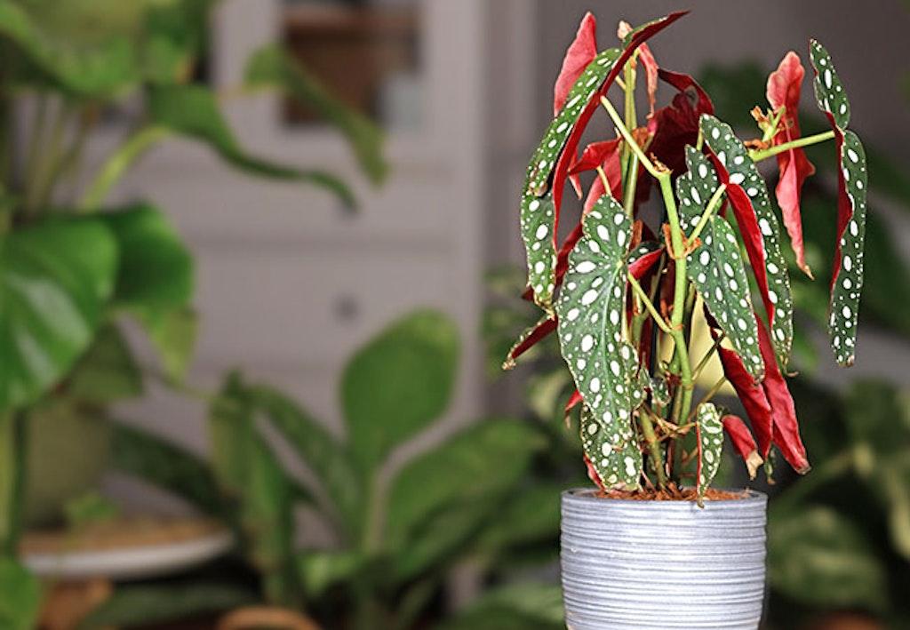 Trend planter