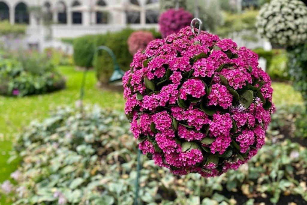 Lyserød svævende blomsterkugle