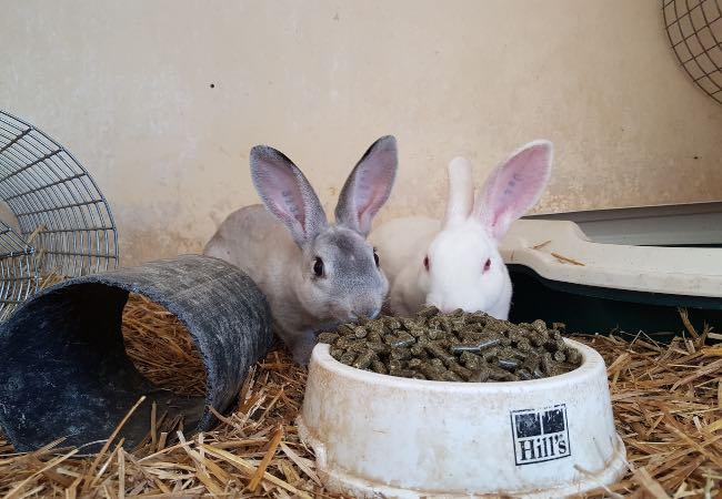 Kaninfoder