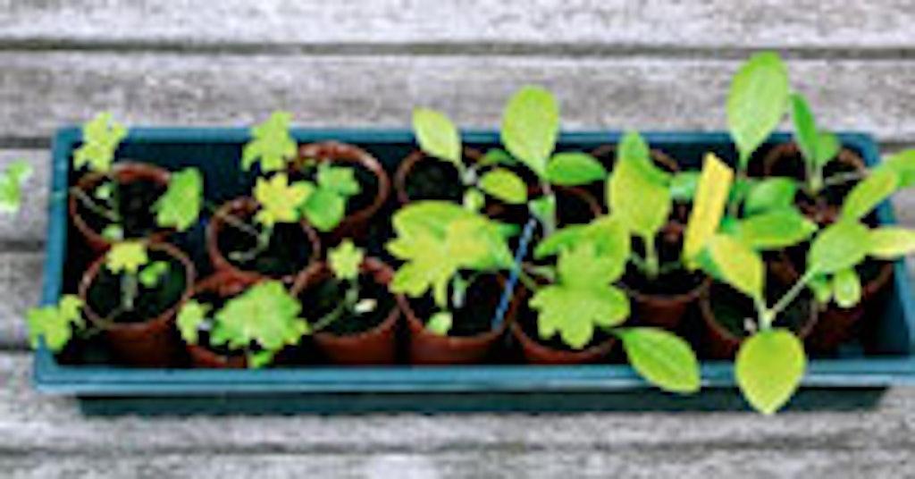 Væn planterne til udelivet