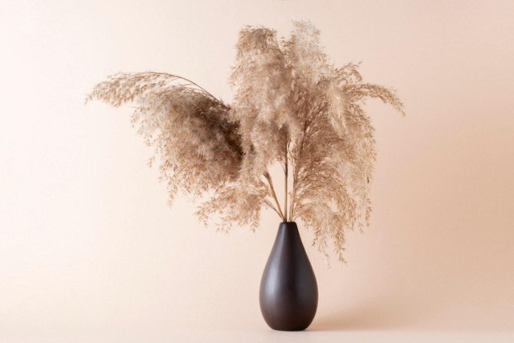 Tørret pampasgræs fungerer flot i tørret form som evighedsblomster.