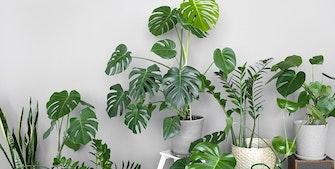Planter som hitter